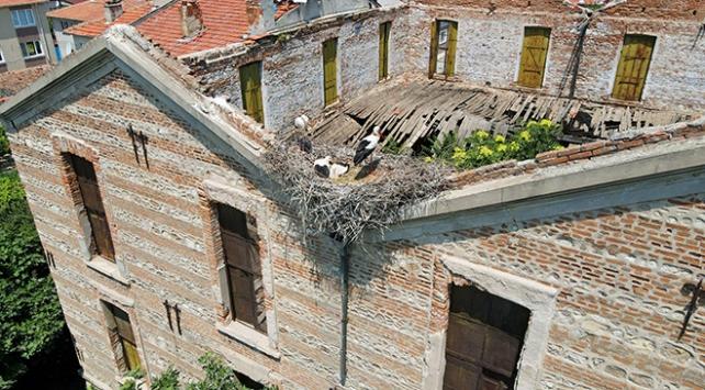 Tarihi fabrika leyleklere yuva oldu