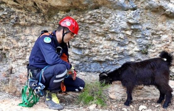 Uçurum kenarında mahsur kalan keçileri itfaiye kurtardı