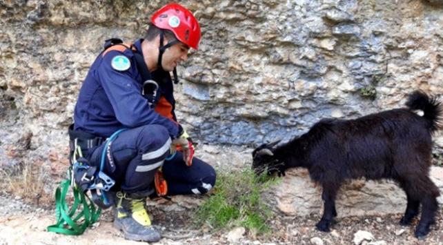 Uçurumda mahsur kalan keçileri itfaiye kurtardı