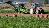 Bakan Albayrak'tan pancar çiftçisine bayram müjdesi