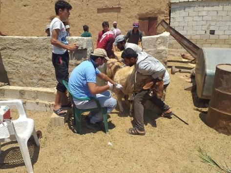 Barış Pınarı Harekatı bölgesinde tarım ve hayvancılık destekleniyor