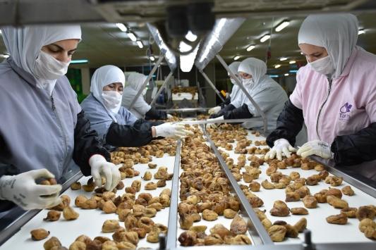 Aydından yılın 12 ayı incir ihracatı yapılıyor