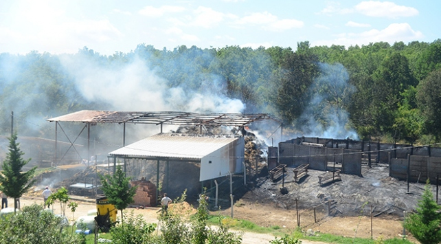 Kırklarelinde çiftlik yandı, 25 hayvan telef oldu