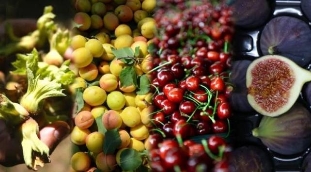 İhracata dayalı meyvelerde markalaşma talebi