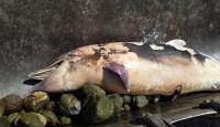 İzmir'de ölü yunuslar karaya vurdu
