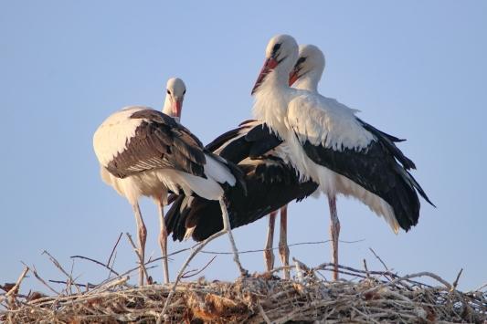 Doğunun kuş cenneti: Iğdır