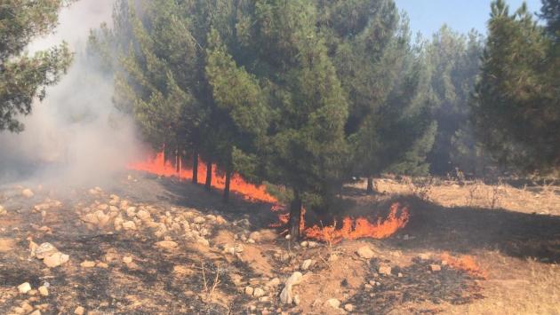 Şanlıurfada orman yangını
