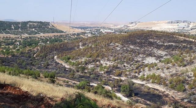 Gaziantepteki orman yangınında 2 hektar alan zarar gördü