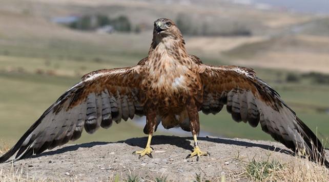 Vanda tedavi edilen 23 kuş yeniden doğayla buluştu