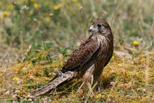 Vanda tedavileri tamamlanan 23 kuş doğaya bırakıldı