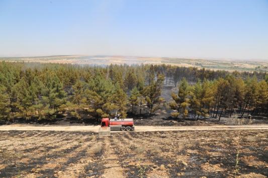 Gaziantepte çıkan orman yangını söndürüldü