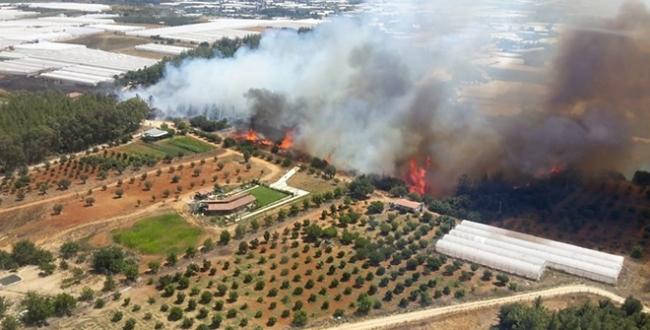 Antalyanın Aksu ilçesinde orman yangını