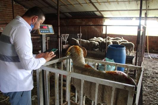 Edirnede koronavirüs salgını WhatsApp üzerinden kurbanlık satışını artırdı