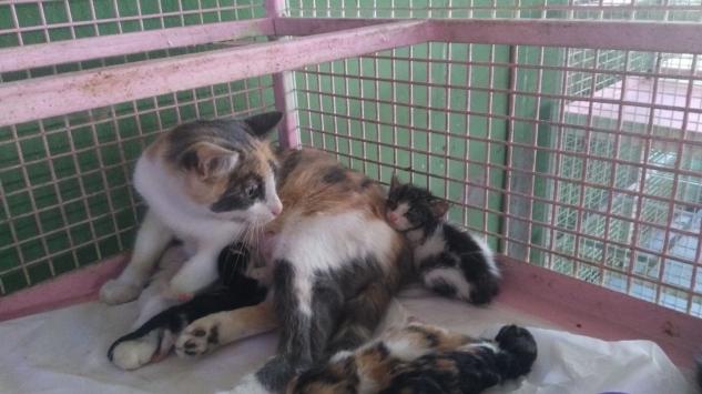 Mersinde çöp konteynerinde sıkışan kedi yavrusu kurtarıldı
