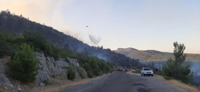 Antalyada ormanlık alanda yangın çıktı