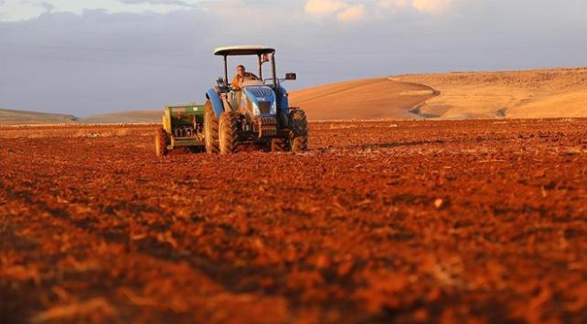Üreticilere 6 bin 100 ton tohum dağıtıldı