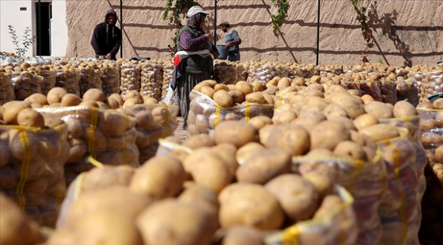 Hasat verimli geçti, soğan ve patateste ihracat serbest bırakıldı