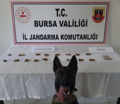 Bursada evinde uyuşturucu ele geçirilen şüpheli gözaltına alındı