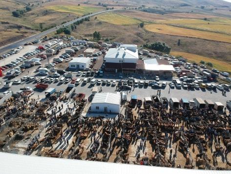 Ankaradaki hayvan pazarında Kurban Bayramı hareketliliği başladı