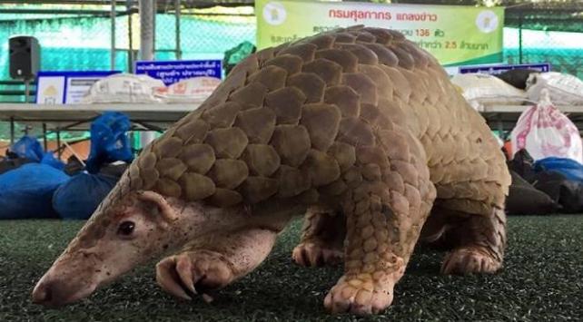 Bir ülkede daha yabani hayvan ticareti ve tüketimi yasaklandı