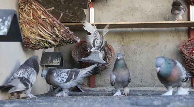 Diyarbakırda güvercin oteli açıldı