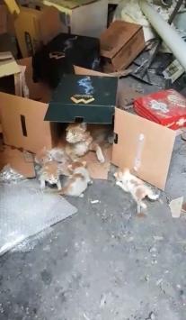 İki duvar arasına sıkışan yavru kedi kurtarıldı