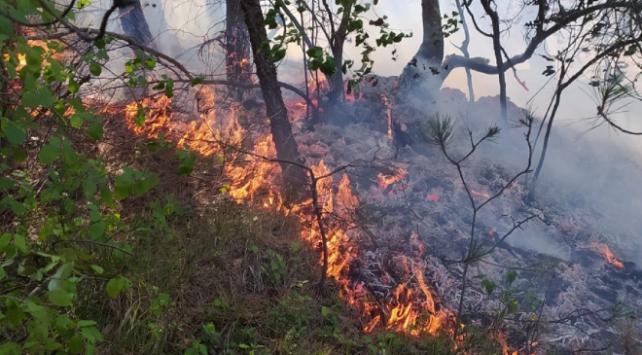 Samsunda ormanlık alanda yangın