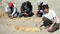 Kayseri'de 7,5 milyon yıllık 2 fosil daha bulundu