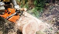 Yaş meşe ağacını kesen kişiyi Yargıtay affetmedi