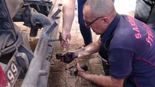 Yangında mahsur kalan kedi yavrularını itfaiye kurtardı