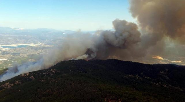 Aydında ormanlık alanda yangın