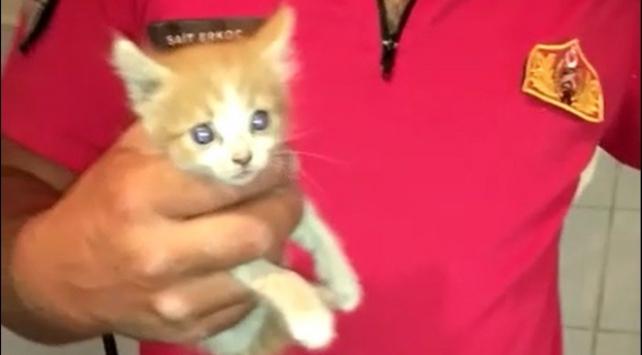 Apartman boşluğuna düşen kediyi itfaiye ekipleri kurtardı