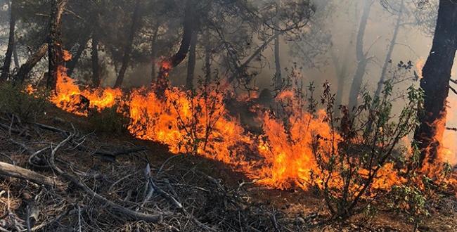 Sinopta 2 ayrı noktada orman yangını