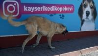 Trafik kazası mağduru köpeklere bakımevinde koruma