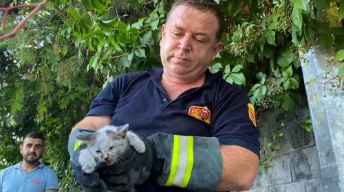 Motora sıkışan kediyi kendi sesi kurtardı