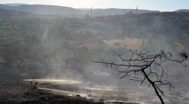 Manisada orman yangını söndürüldü