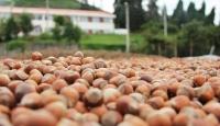 Trabzon'dan 54 ülkeye fındık ihraç edildi