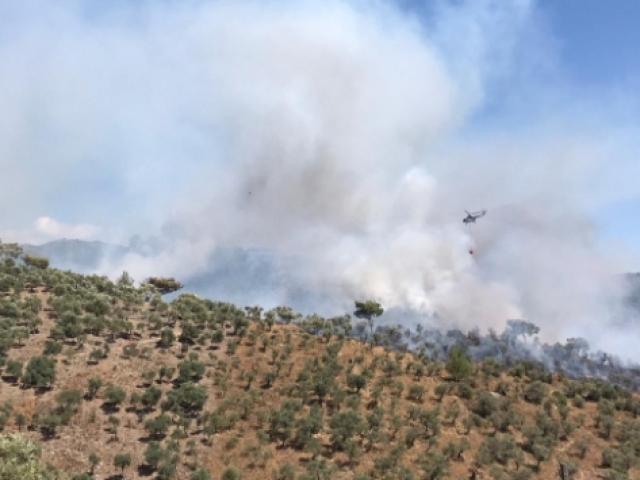 Muğla'da ormanlık alanda yangın