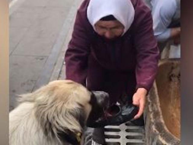 Köpeğe su içiren yaşlı kadın: Kendi nefsini düşünmeyeceksin