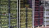 Tarım ürünleri ihracatı COVID-19'a rağmen arttı