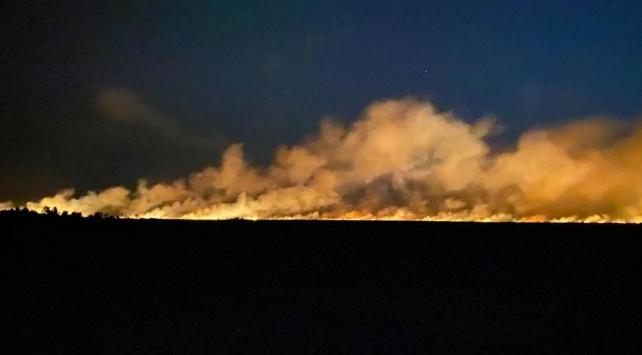 Samsunda sazlıkta çıkan yangın ormana sıçradı