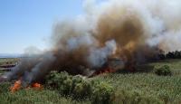 Edremit'te sazlık alanda yangın: İki cadde trafiğe kapatıldı