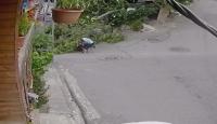 İstanbul'da bisikletli çocuğun üstüne ağaç devrildi