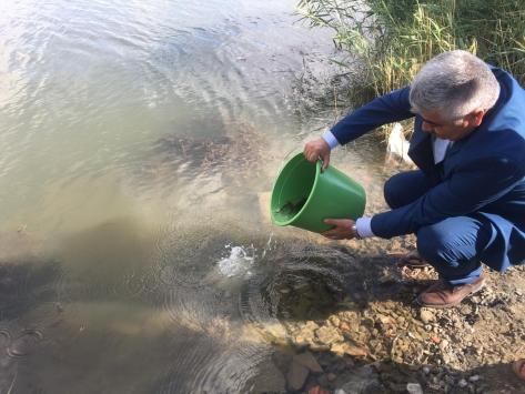 Ulaş Gölüne yavru sazan bırakıldı