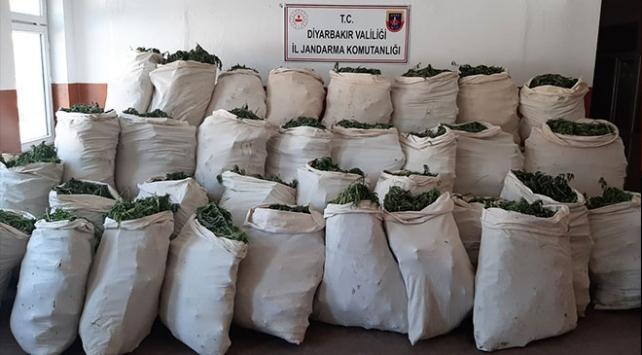 Diyarbakırda 1 milyondan fazla kök kenevir ele geçirildi