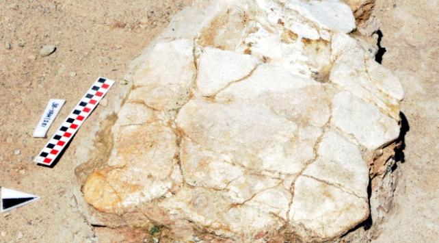 Kayseride 7.5 milyon yıllık kaplumbağa fosili bulundu