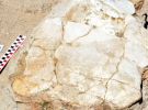 Kayseri'de 7.5 milyon yıllık kaplumbağa fosili bulundu