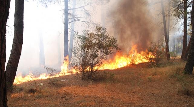 Aydos Ormanında çıkan yangınlar için özel ekip kuruldu