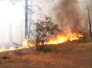 Aydos Ormanı'nda çıkan yangınlar için özel ekip kuruldu