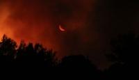 Bakanı Pakdemirli: Çeşme'deki yangında 50 hektarlık bir alan etkilendi